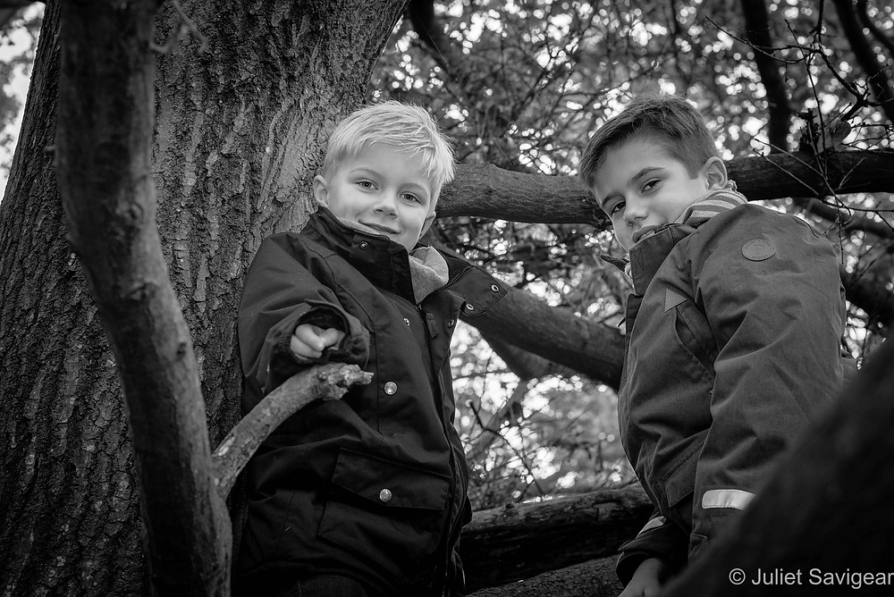 Brothers in the tree