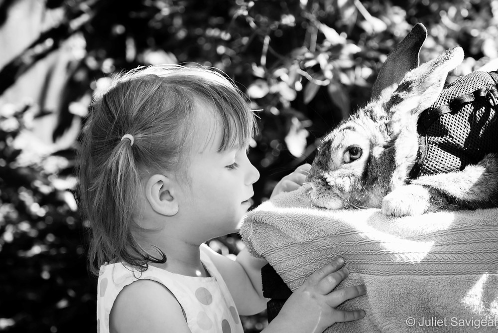 Pet Rabbit - Children's & Pet Photography, Putney
