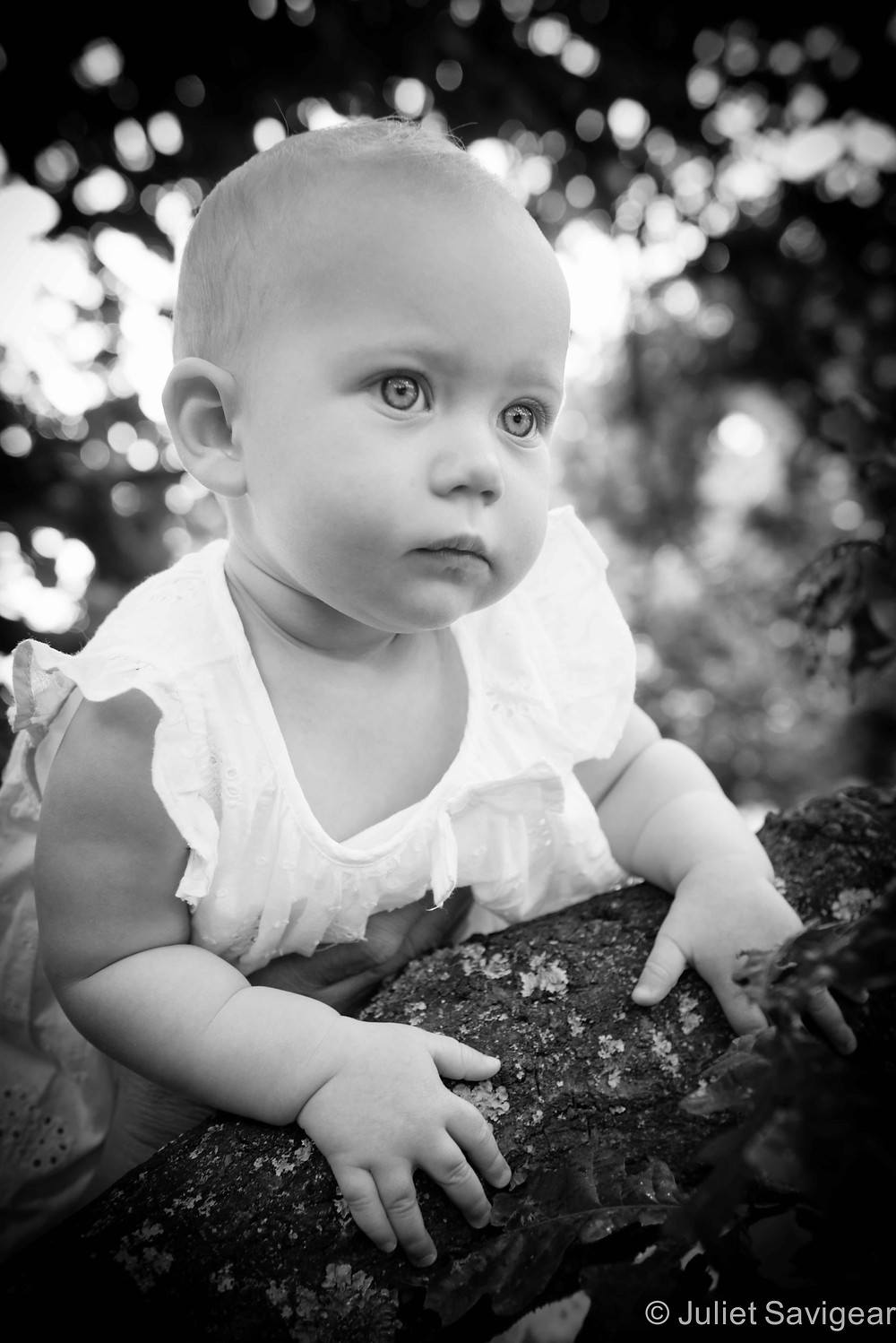On The Branch - Baby Photography - Wimbledon
