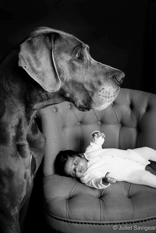 Dog & Baby - Baby & Pet Photography, Hammersmith