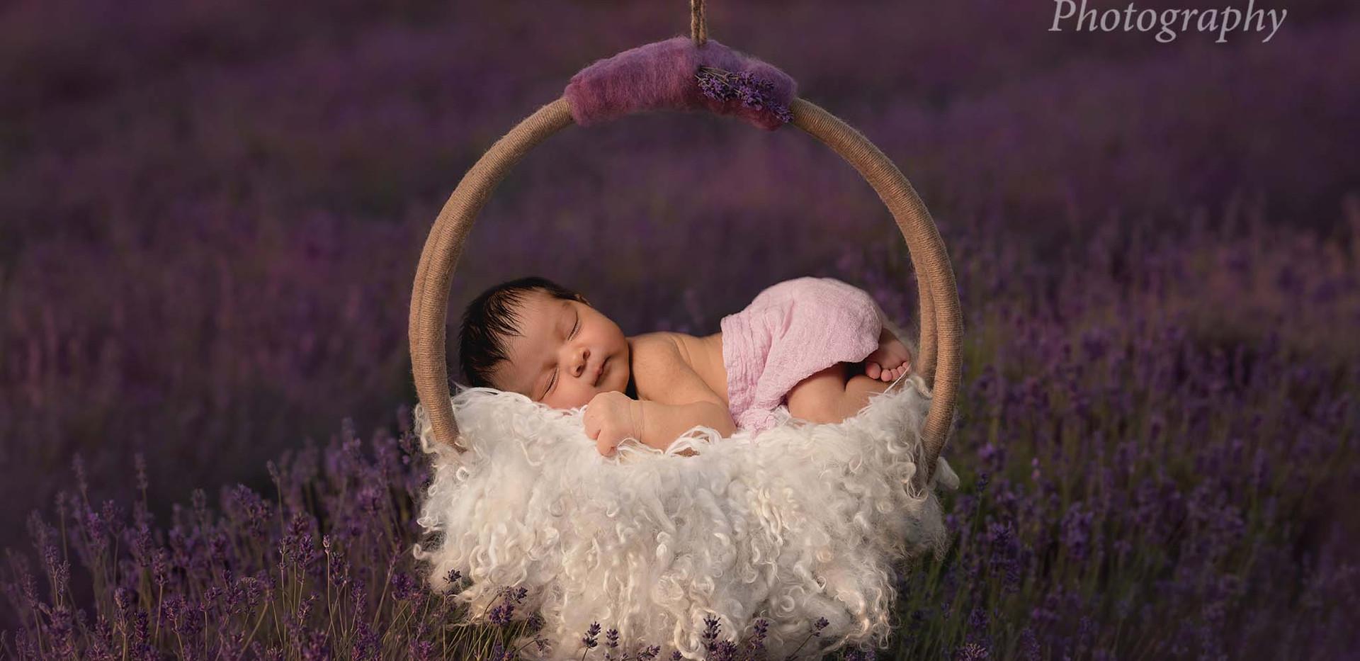 Lavender Baby