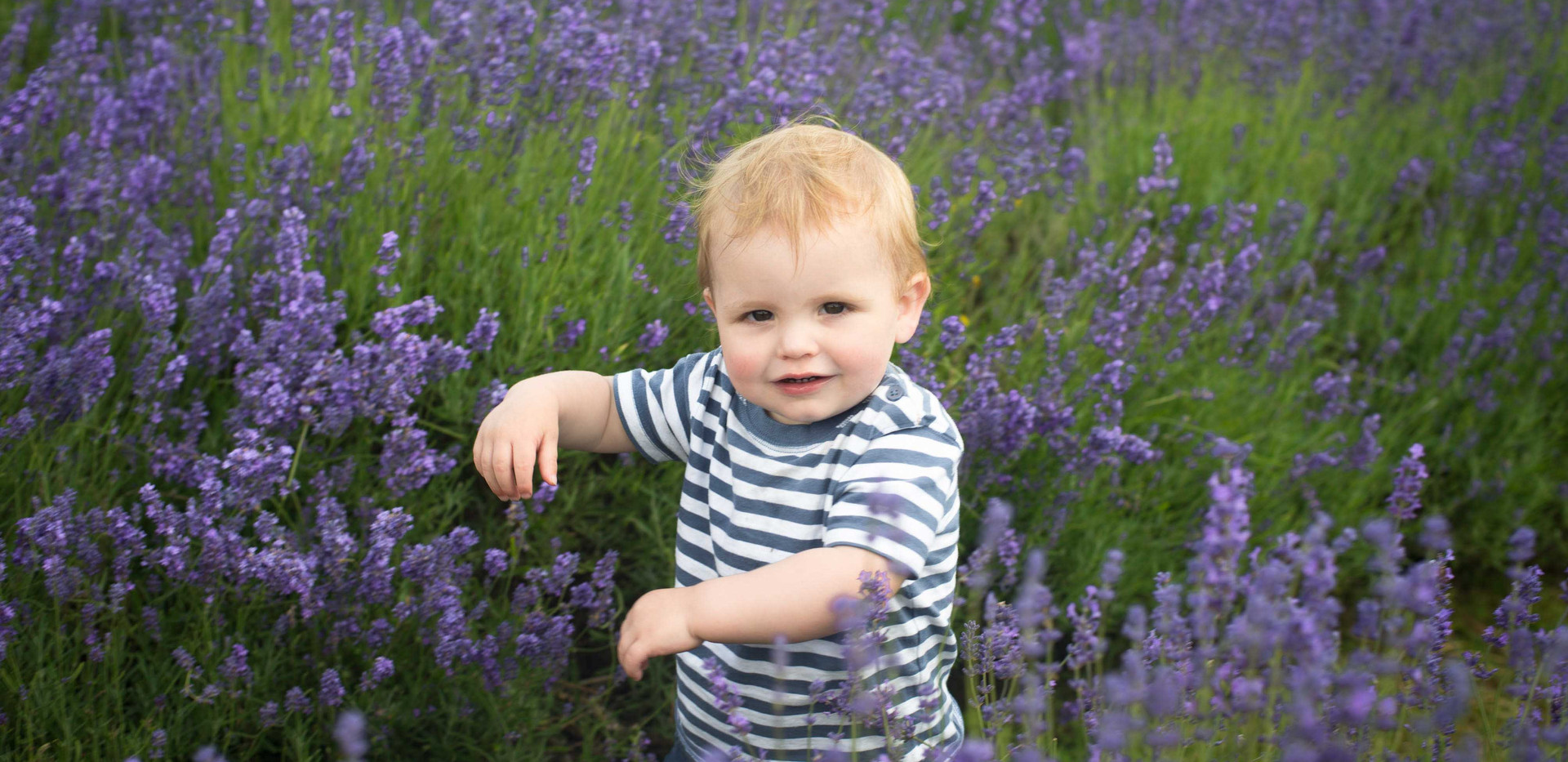 Toddler In The Lavender