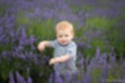 Lavender Fields Children's Photographer