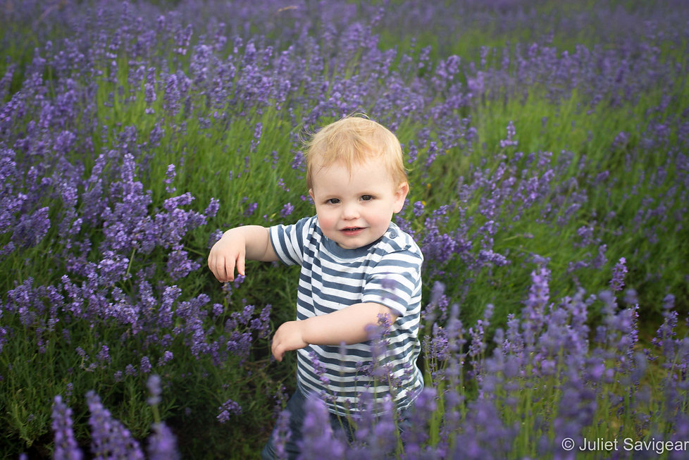 Lavender Fields Children's Photographer