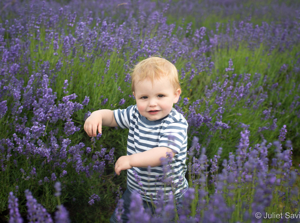 Toddler In The Lavender
