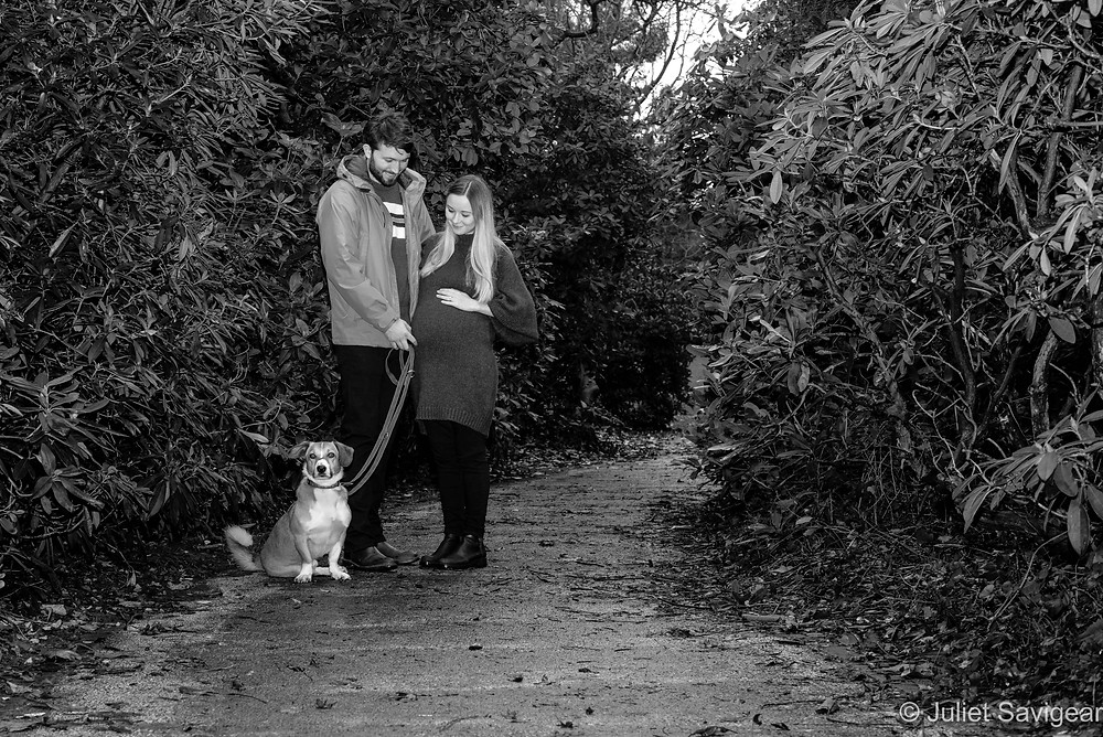 Outdoor maternity shoot with dog