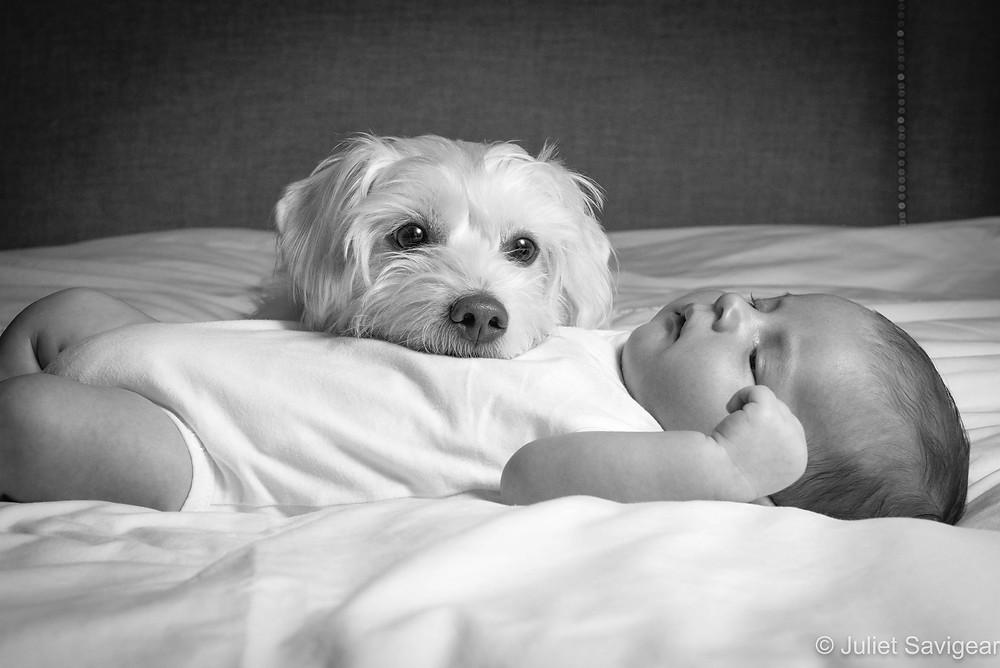 Dog with sleeping baby