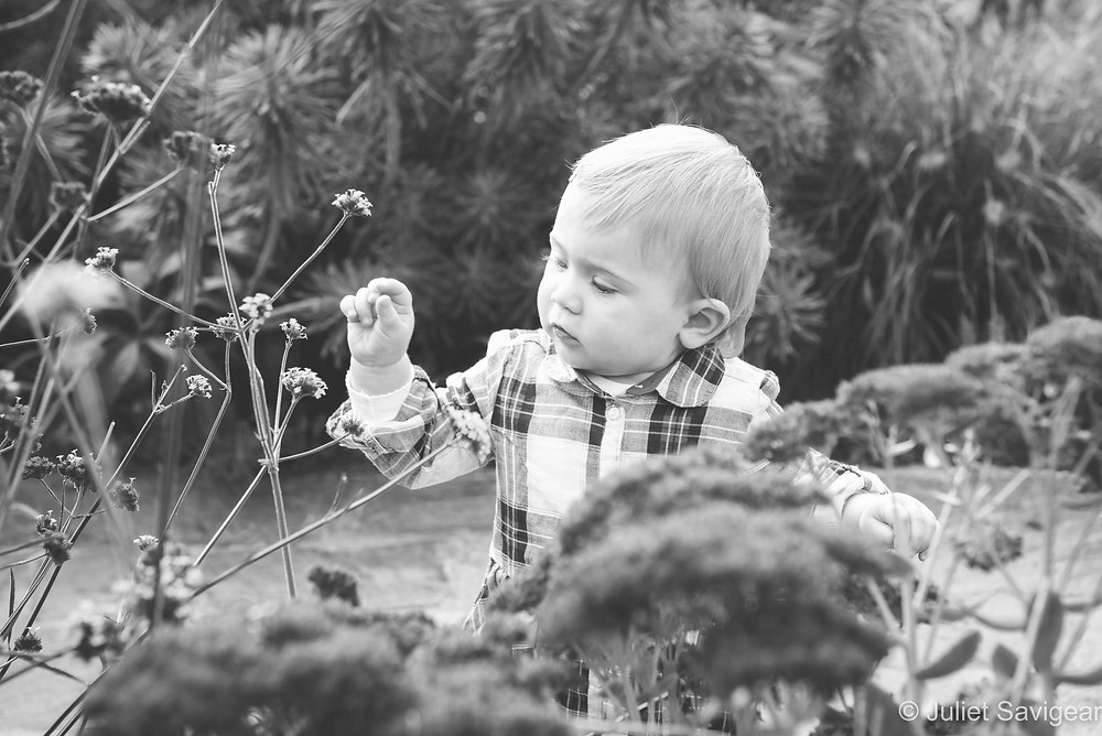 Toddler exploring flowers