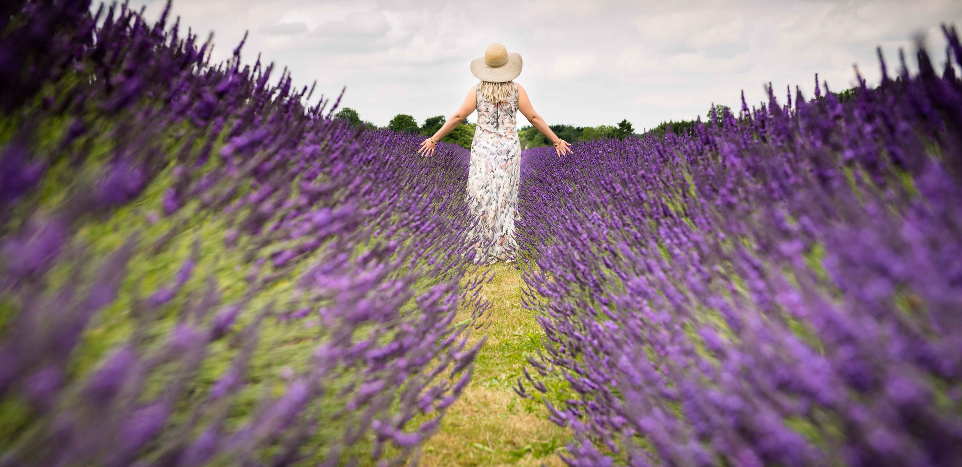 Walking Through The Lavender