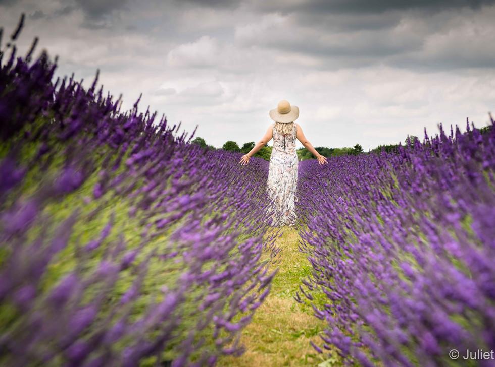 Walking Through The Lavender