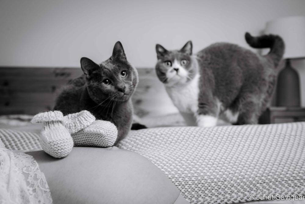Cats & Bump