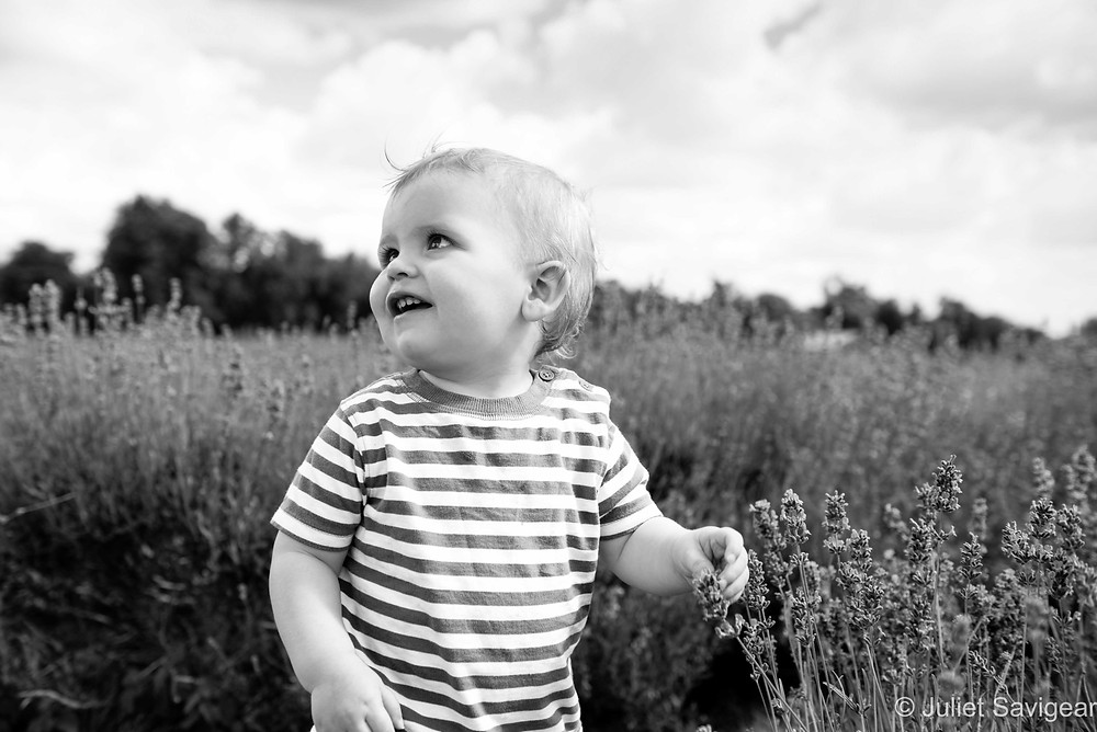 Children's Lavender Field Photography, Surrey