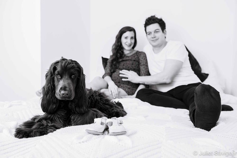 Pregnancy Photography With Dog
