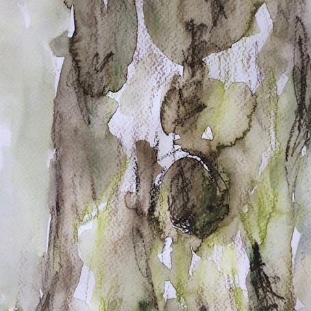 Das Glück einen Baum zu umarmen