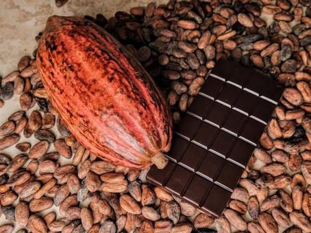 Le cacao au Cameroun