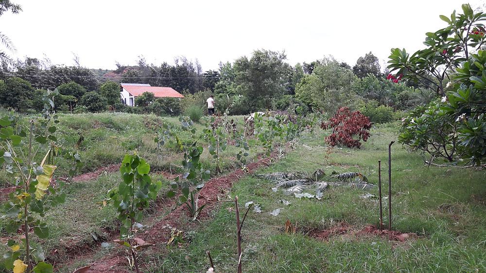 the entire area has transformed into a garden