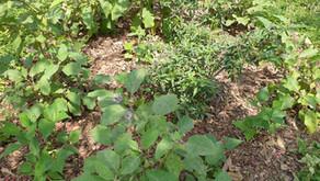 5 Ways to beat the Summer Heat in your Garden