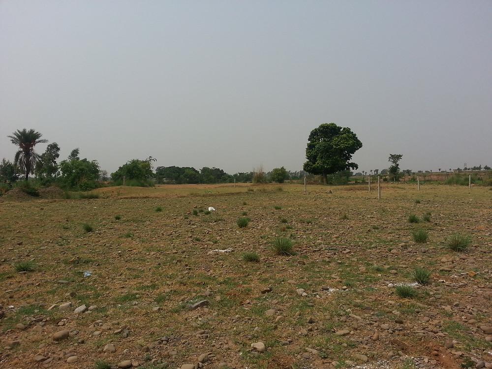 barren land bunga