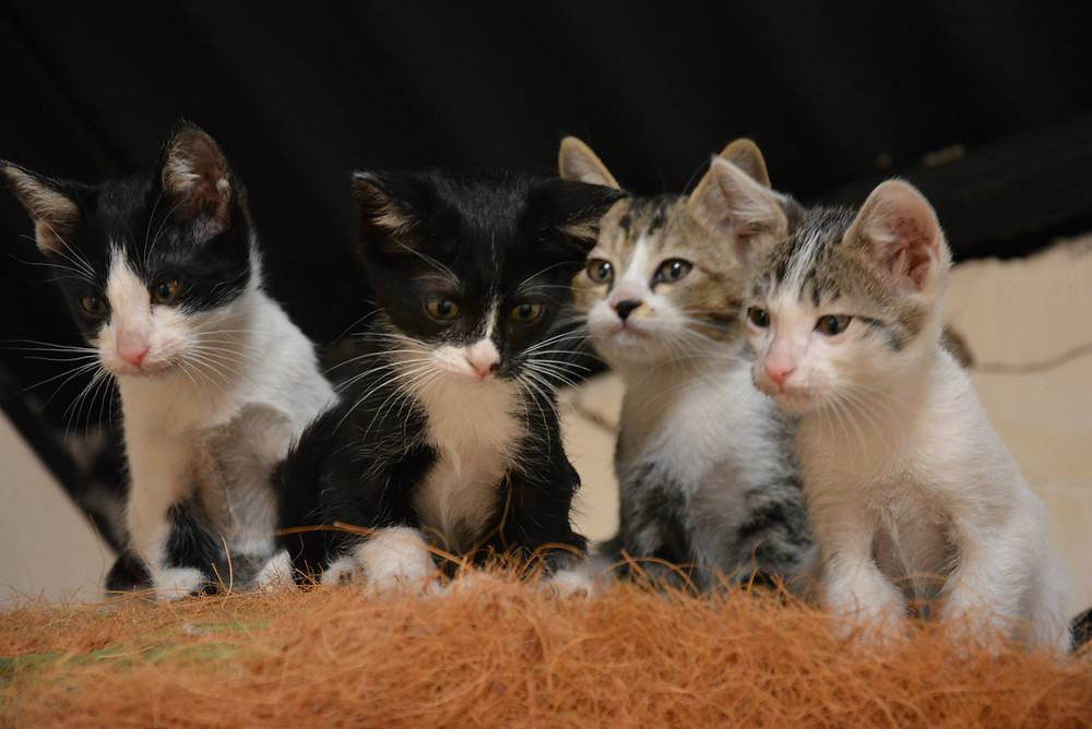 kittens at Aanandaa