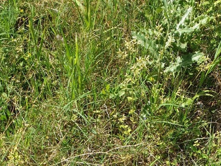 Why do you get Weeds in your Permaculture Garden?