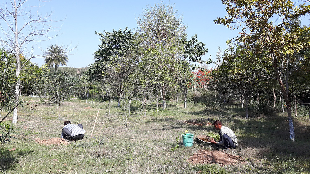 citrus plantation permaculture farm north india