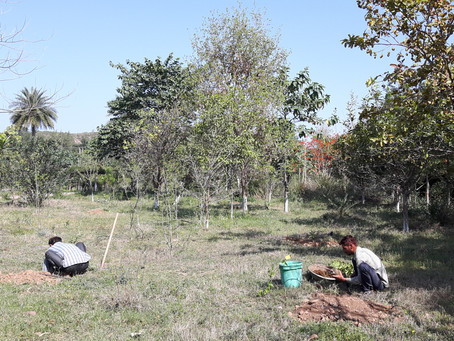 Tree Plantation in Permaculture: Spring Planting