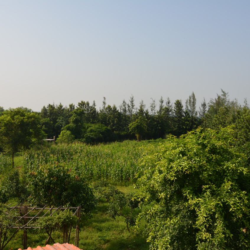 Wood Apple & Mango trees in the foreground, and corn & groundnut fields in the backdrop