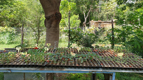 Permaculture Design: Nursery in the Farm