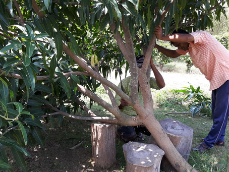 Quick Permaculture Tip: Trimming the Forest