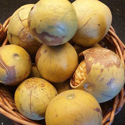 Wood Apple (Bael) seeds
