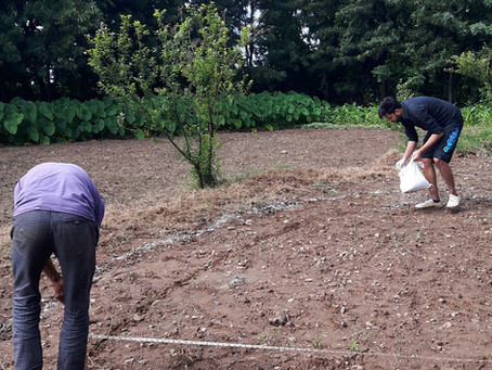 Permaculture Design: Making Raised Beds
