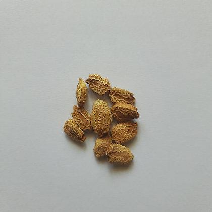 Bitter Gourd (Karela) seeds