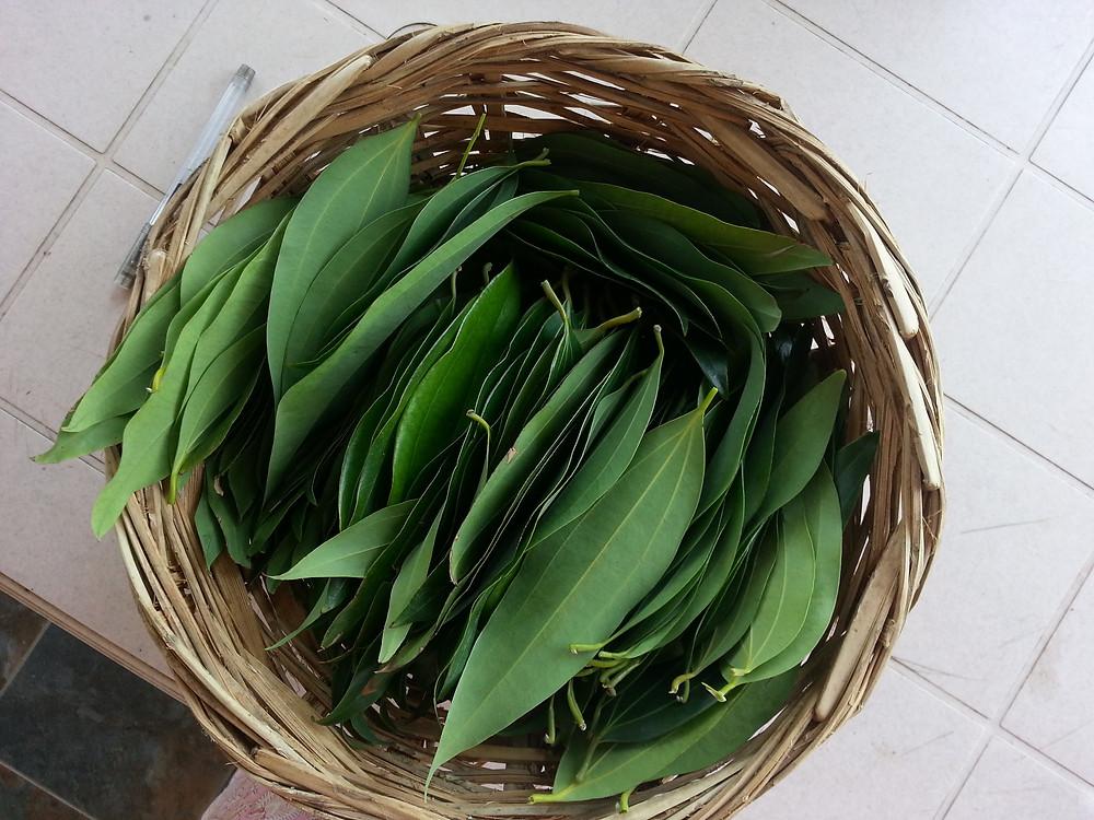 bay leaf tej patta