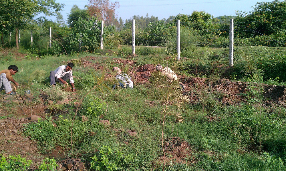 planting windbreak