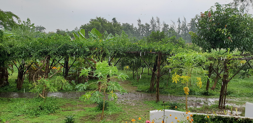 Heavy rains at Aanandaa Permaculture Farm