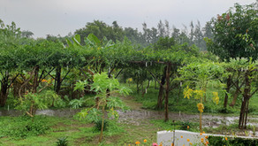 Water Management in Permaculture: After 7 years