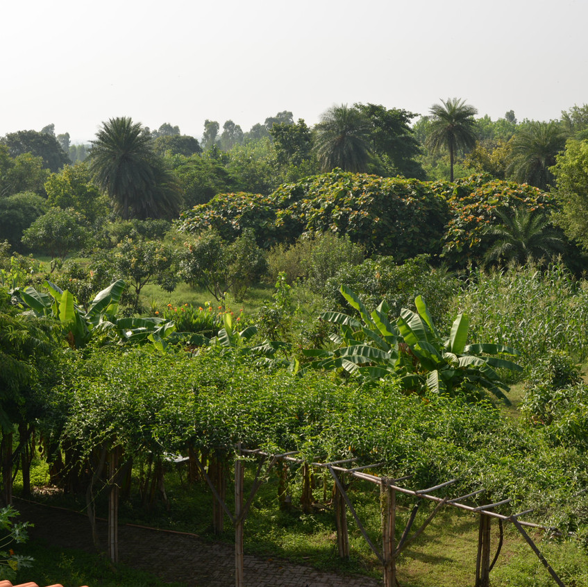 With Bananas, Pomegranates, Lemons, Peaches, Figs, corn - everything growing together