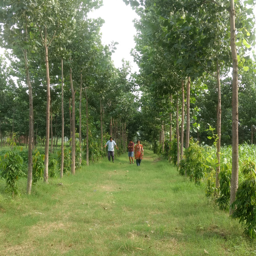 With Poplar trees lining them on all sides
