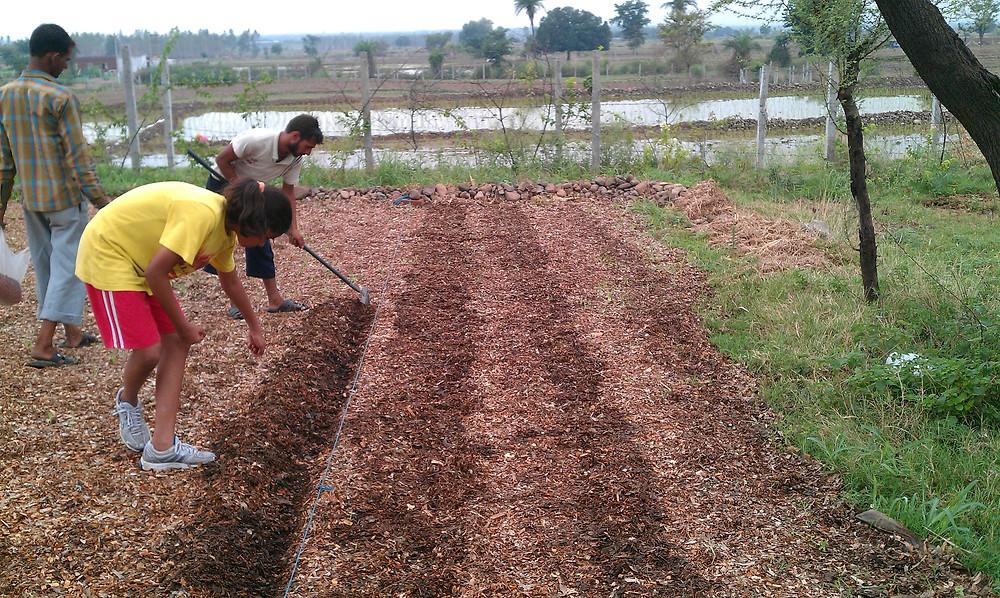 planting groundnut