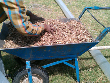 Mulching with Wood Chips