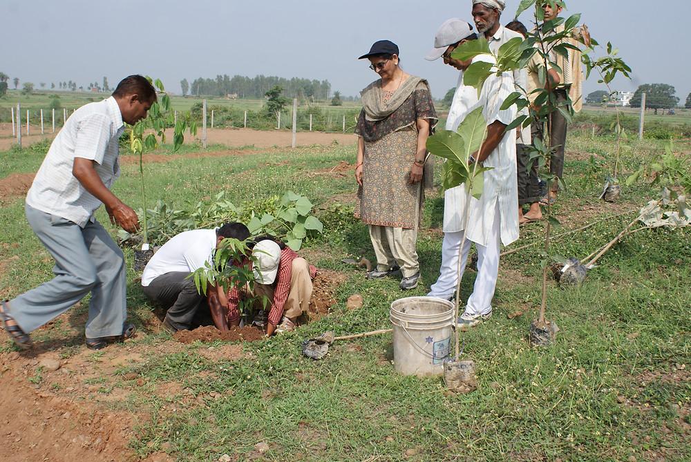 planting first tree at Aanandaa