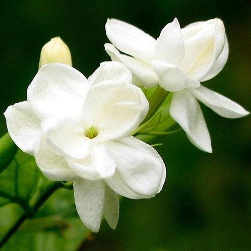 Huile Aromatique -  Jasmin
