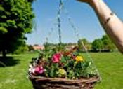 """12"""" wicker hanging basket with plants"""