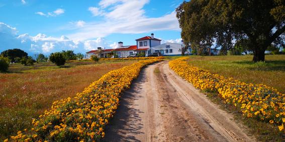 Caminho das flores.jpg