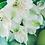 Thumbnail: Fondant bougie madeleine parfumé lys blanc naturel de colza végétale