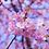 Thumbnail: Fondants  mini cannelés parfumés fleur de cerisier