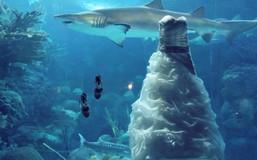shark dress.jpg
