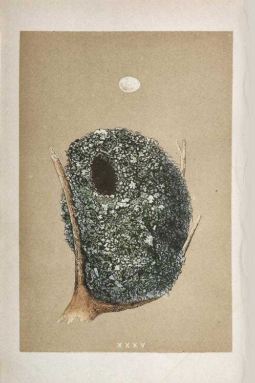 Bird's Nest XXXV by F. O. Morris