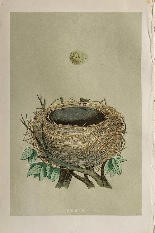 Bird's Nest CXXIV by F. O. Morris