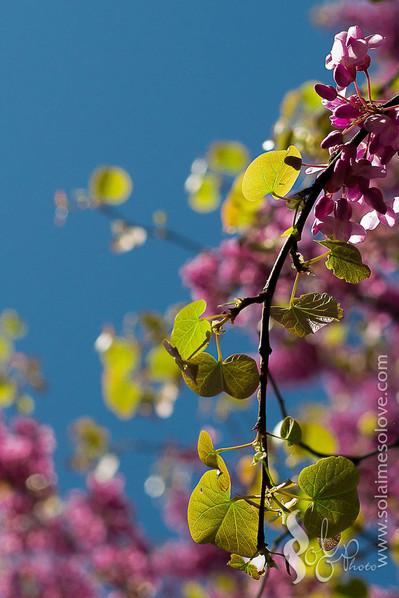 Nouvelles photos sur Flickr